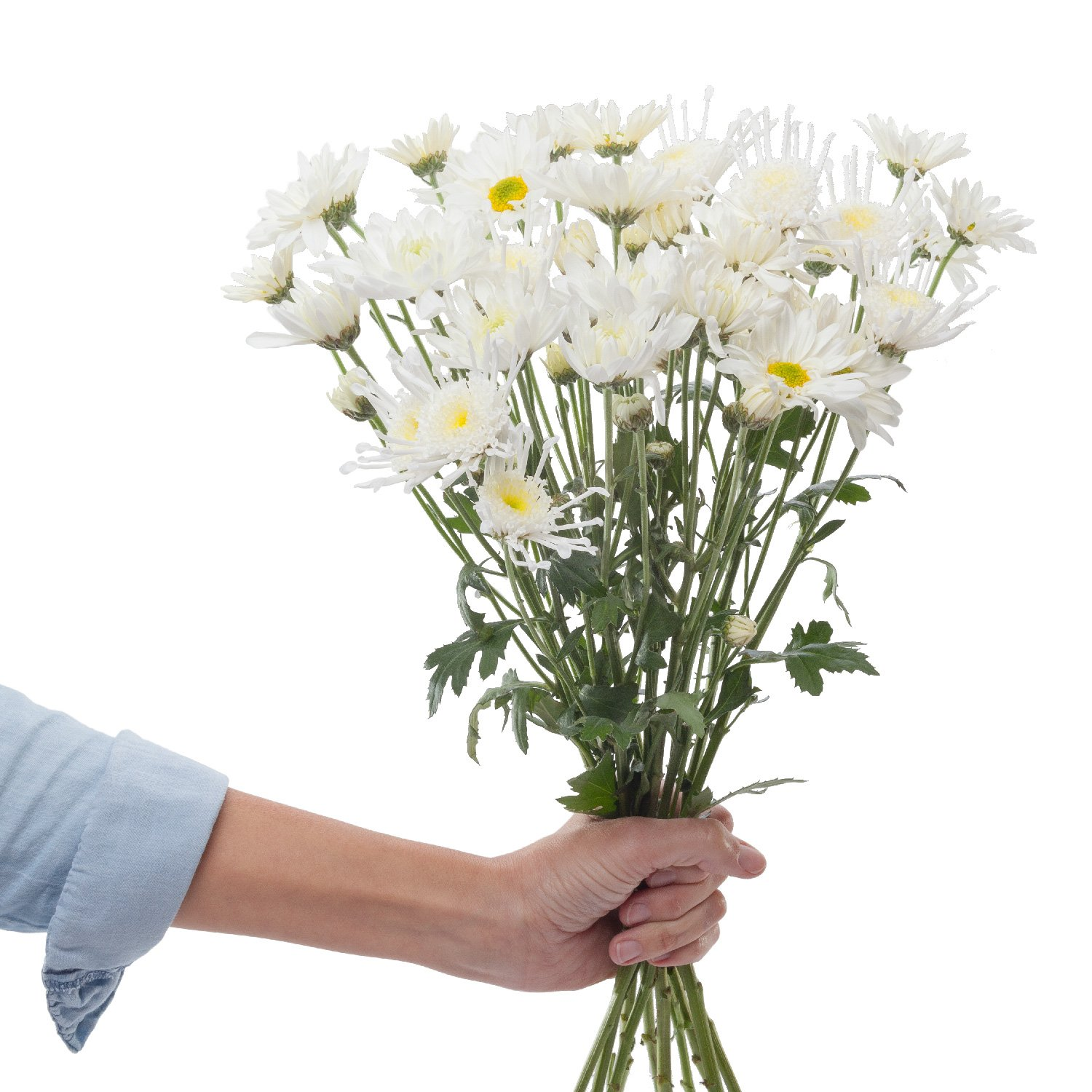 Chrysanthemums | White - 40 Stem Count by Flower Farm Shop