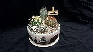 """5.5"""" Cactus Garden"""