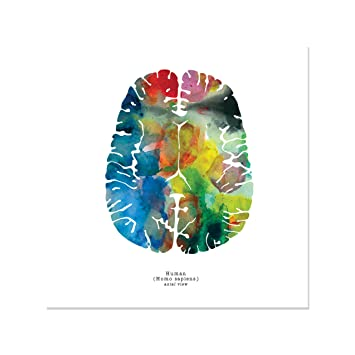 Amazoncom Axial Watercolor Human Brain Art Print 12 X 12