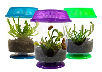 Set Of 3 Live Carnivorous Plants In 4 5 Terrariums Venus Fly Trap
