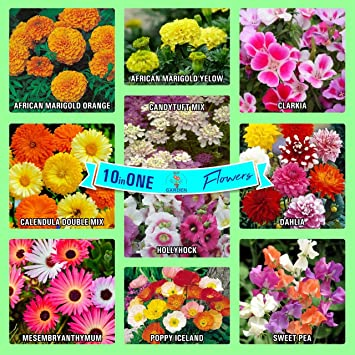 Gate Garden Collection of Sow 10 Flower Seeds Varieties
