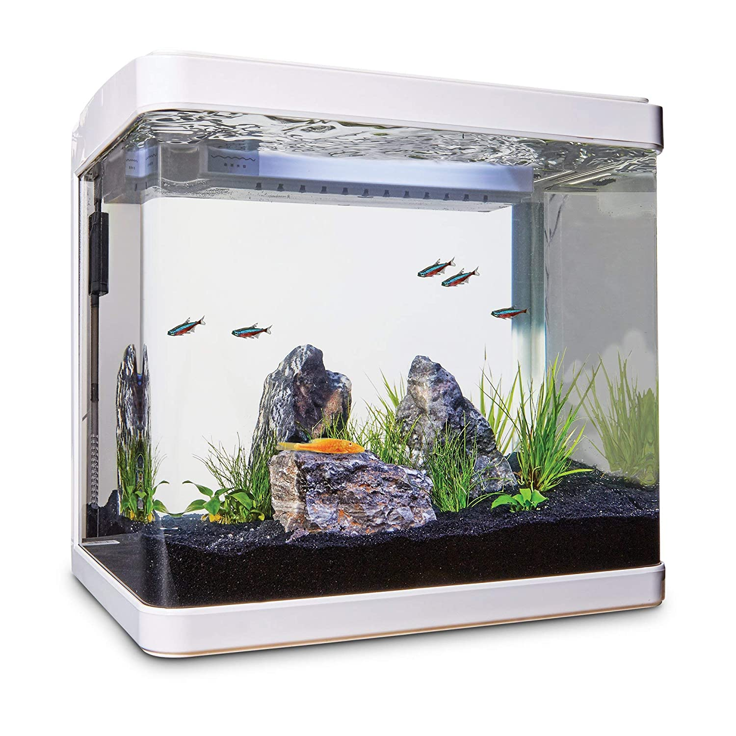 Amazon.com : Imagitarium Freshwater Cube Aquarium Kit, 5.2 GAL : Pet Supplies