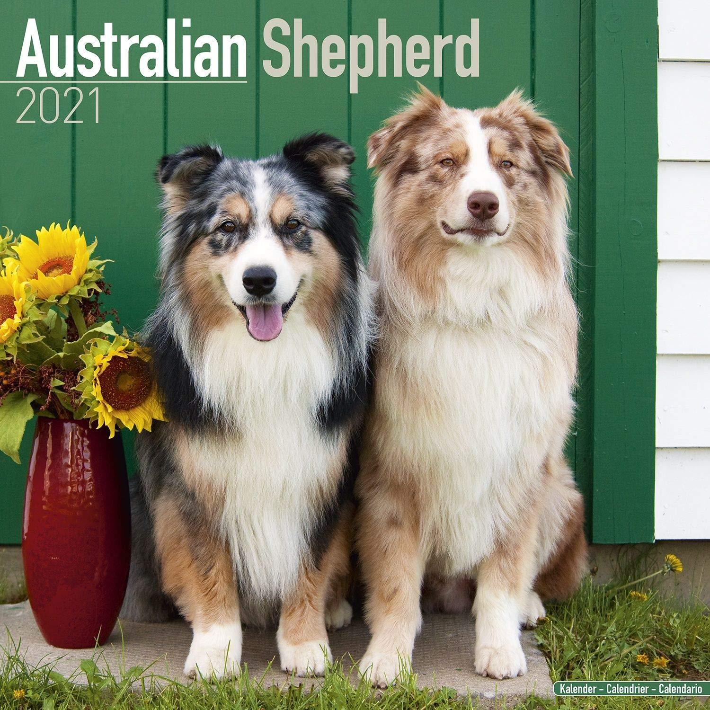 Calendrier Agility 2021 Australian Shepherd Calendar   Dog Breed Calendars   2020   2021