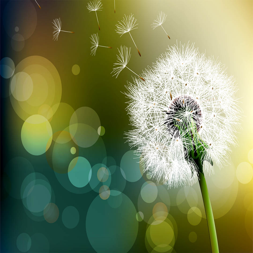 Dandelion Live Wallpaper Amazoncomau Appstore For Android