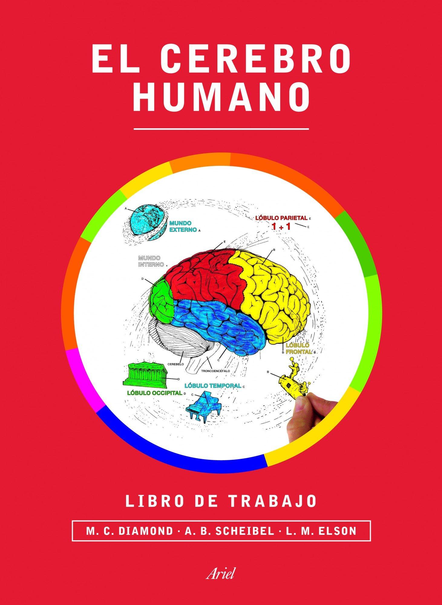 El cerebro humano. Libro de trabajo (Ariel): Amazon.es: Marian C ...