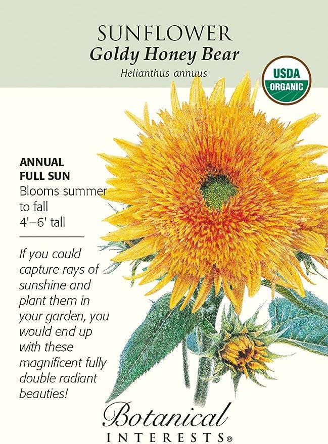 Goldy Honey Bear Sunflower Organic 25 Seeds