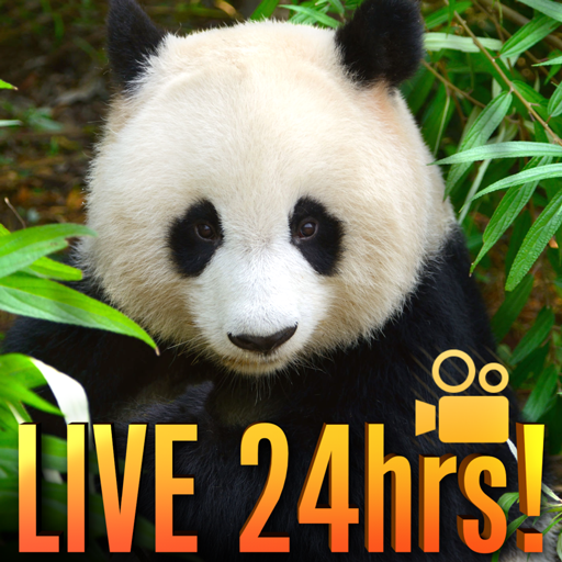 Amazon com: LIVE PANDA CAM: Appstore for Android