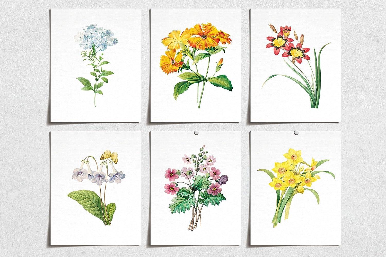 Vintage Flower Daffodil Bell Prints (6) | Modern Wall Art Victorian Illustration | Wall Art Decor Prints | Room Wall Decor | YP-1009