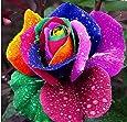Exotic Plants Rose arcobaleno - Rosa arcobaleno - 10 semi