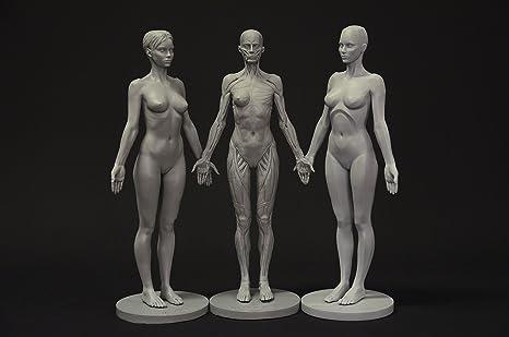 Figura de colección: Planar, ecorche y de piel – Referencia ...