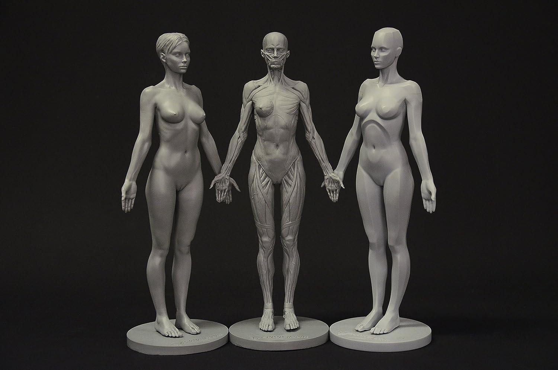 Amazon.com: Female Anatomy Figure Collection: Planar, Ecorche and ...