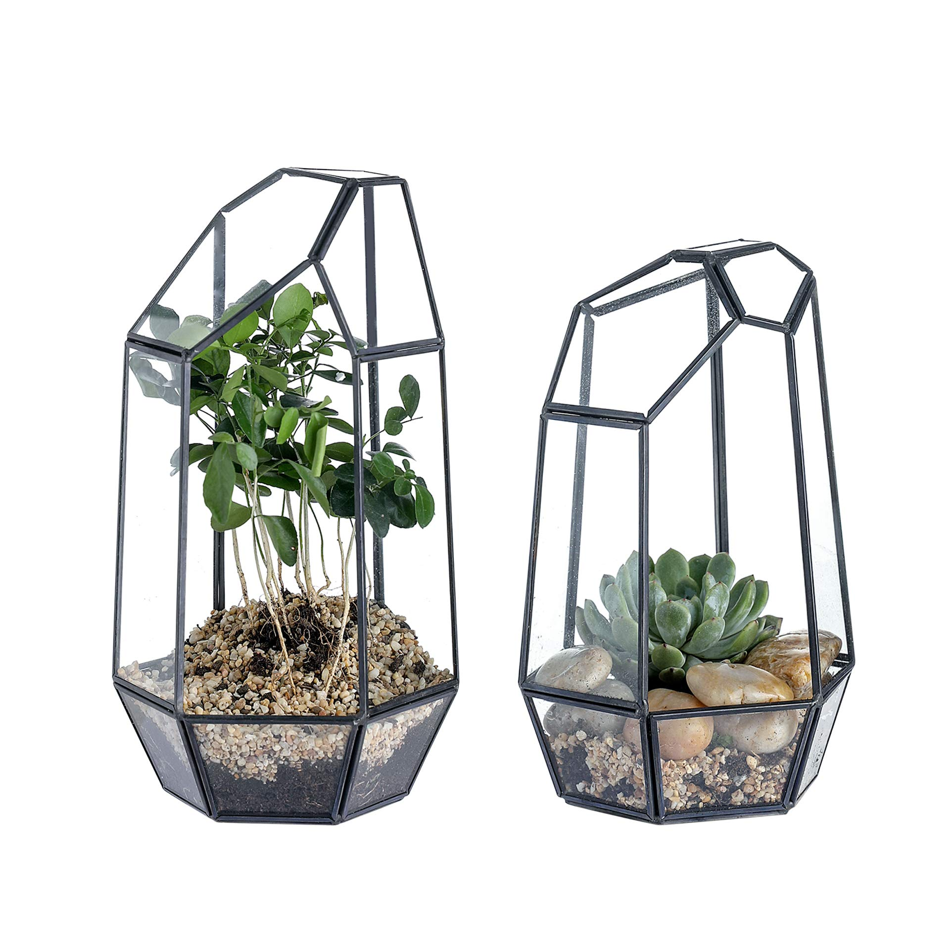 Whole Housewares Glass Geometric Terrarium Container 5.3X9.6 inch and 4.8X7.7 inch Tabletop for Succulent & Air Plant (Black, 2pcs) by Whole Housewares