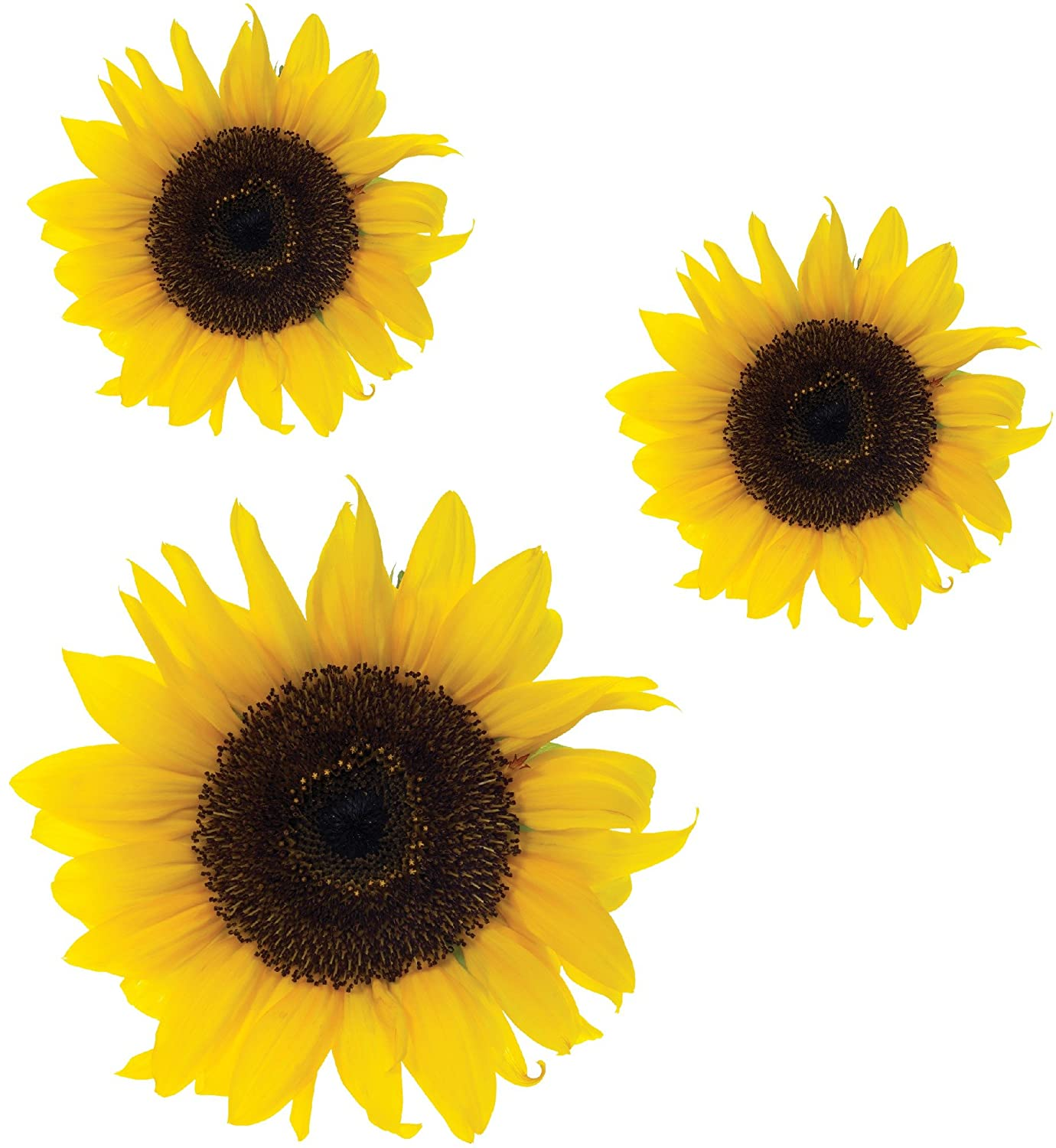 sunflower flower stickers car van wall art laptop wheelie bin sunflower flower stickers car van wall art laptop wheelie bin fridge decals amazon co uk kitchen home