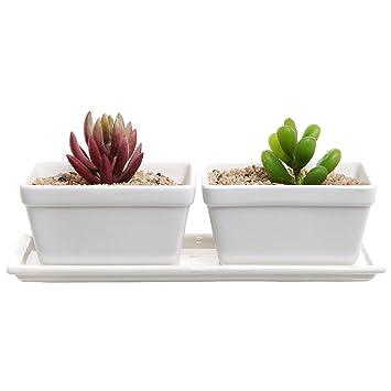 Amazon small modern 2 piece white ceramic windowsill flower small modern 2 piece white ceramic windowsill flower box w removable tray succulent planter mightylinksfo