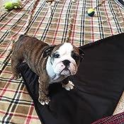 Amazon Com Best 100 Waterproof Fleece Pet Throw Dog
