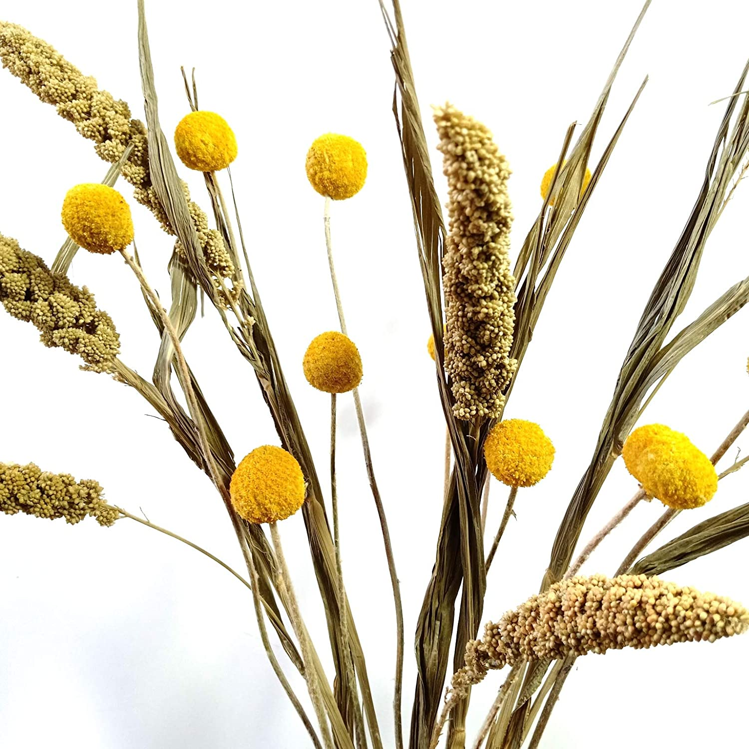 Amazon Com Ghy Decor Dried China Millet Flower Bouquet Natural