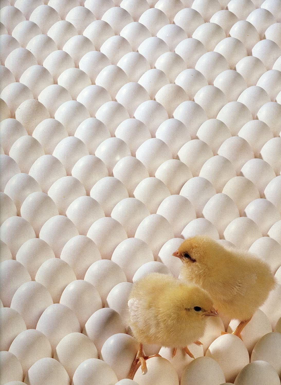 Dutch treat   8035- 18 x 24 - 550 Piece Jigsaw Puzzle of Gelb/ ROT flowers