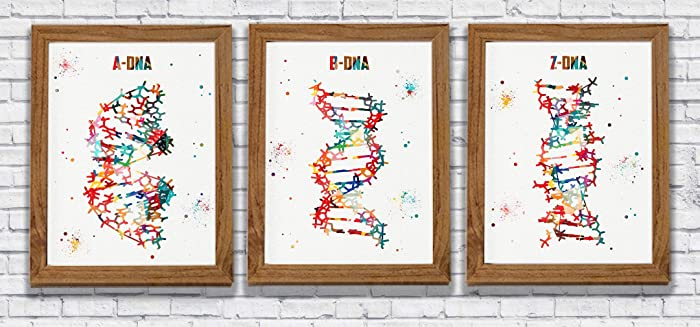 Amazon.com: DNA Molecule Watercolor Art Poster Set A,B and Z Dna ...