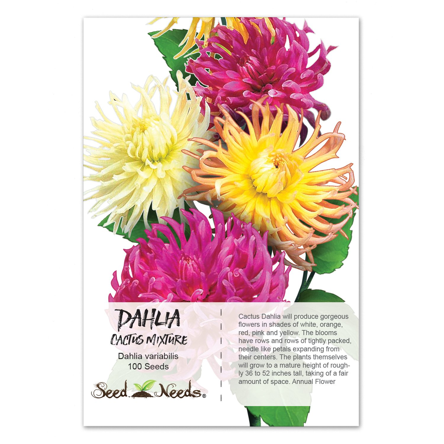 Amazon Package Of 100 Seeds Cactus Mixed Dahlia Dahlia