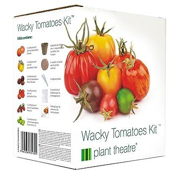Plant Theatre - Juego de cultivo Wacky Tomatoes Kit con semillas de 6 variedades diferentes de tomate, un regalo ideal: Amazon.es: Jardín