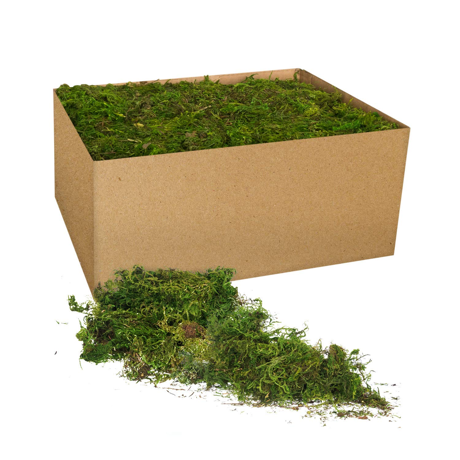 3 LB Bulk Case Loose Chunks Royal Imports Fresh Dried Forest Green Moss Naturally Preserved