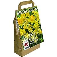 Tulpen Big Buy Vorteilspack