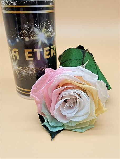 Rosa eterna preservada Multicolor arcoíris Pastel Extra. Gratis TU ENVÍO. Rosa preservada eterna arcoíris Extra. Tubo de conservación 25 cm. Hecho en España.: Amazon.es: Hogar