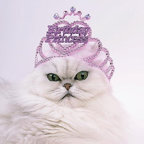 Cat Princess gato - Tarjeta de felicitación de cumpleaños ...