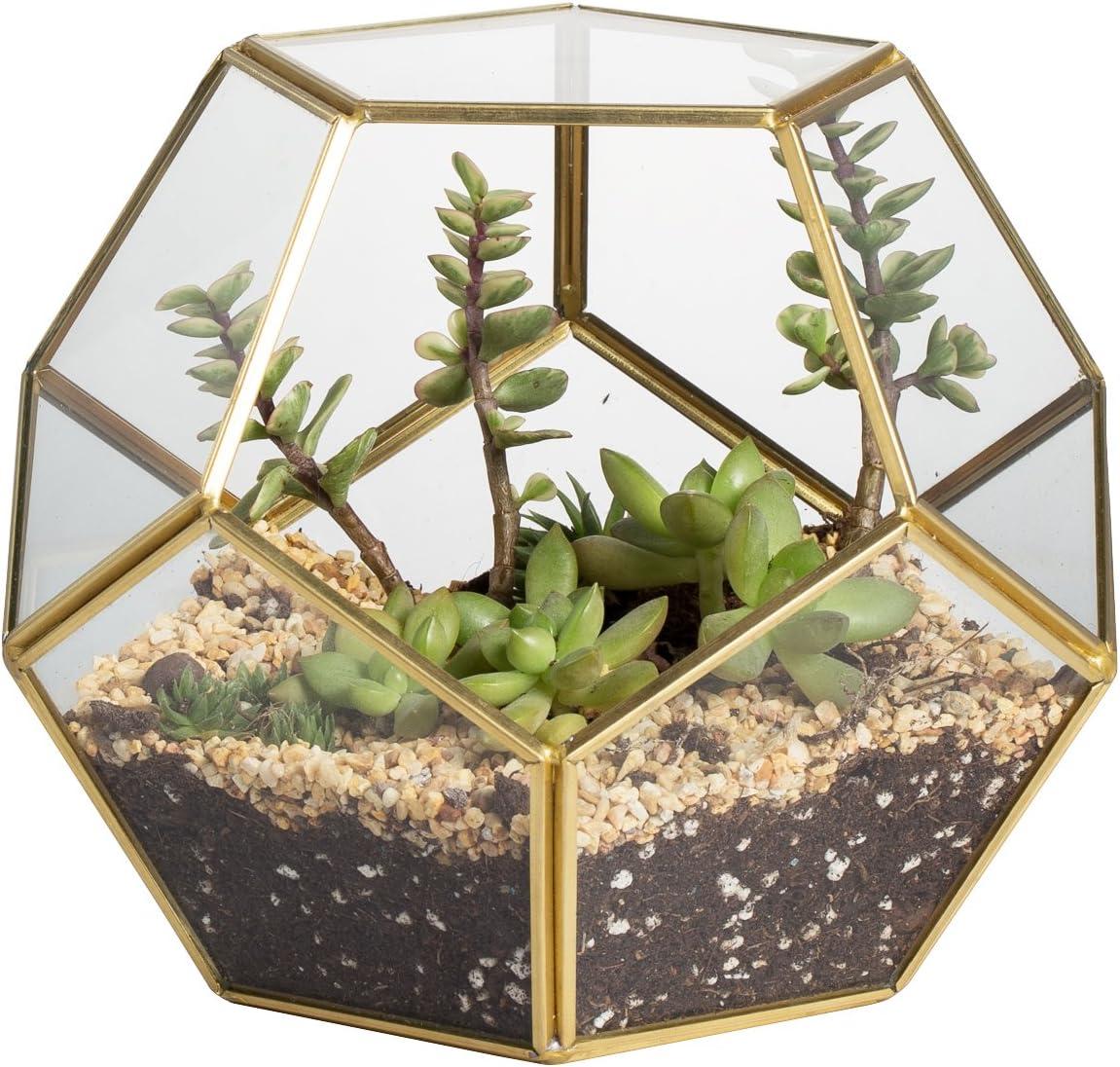 NCYP Terrarium en forme de dodécaèdre et plaques de verre pentagonales pour plante Transparent gold copper transparent Pas de plantes