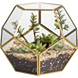 Gold Pentagon Sphere Glass Round Geometric Display Terrarium Box Copper Ball Shape Open Fern Moss Succulent Air Plants Decor Greenhouse Case For Present 6.89 x 6.89 x 5.9inches