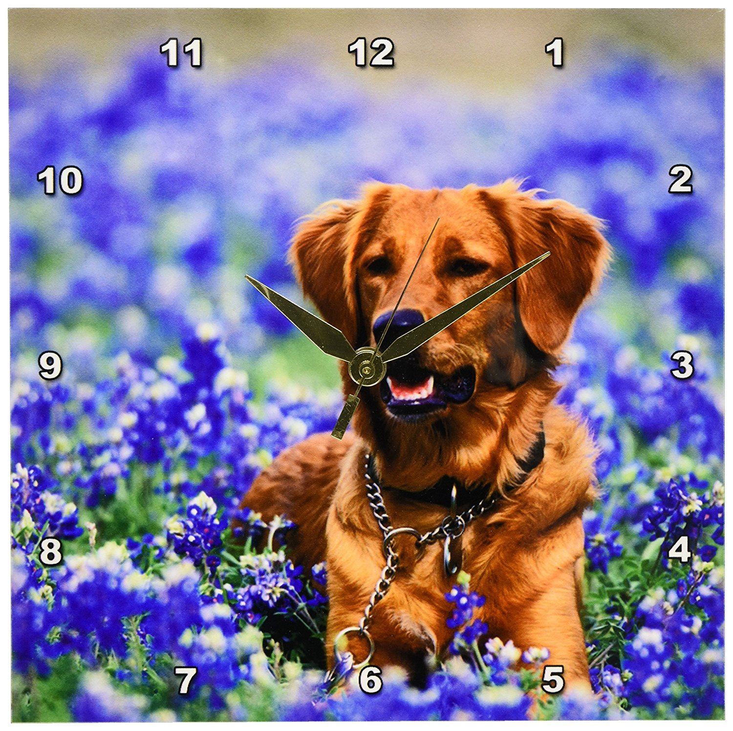 Texas Golden Retriever Dog, Texas Blue Bonnets -Wall Clock, 10 by 10-Inch