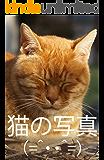 猫の写真 (=^・・^=)