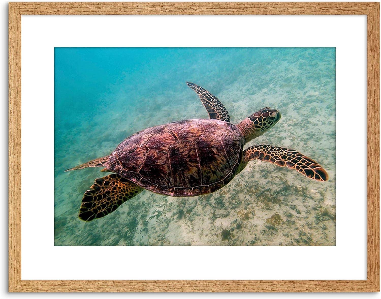 Amazon Com Animal Photo Reptile Red Back Sea Turtle Framed Art Print Poster F97x11827 Furniture Decor