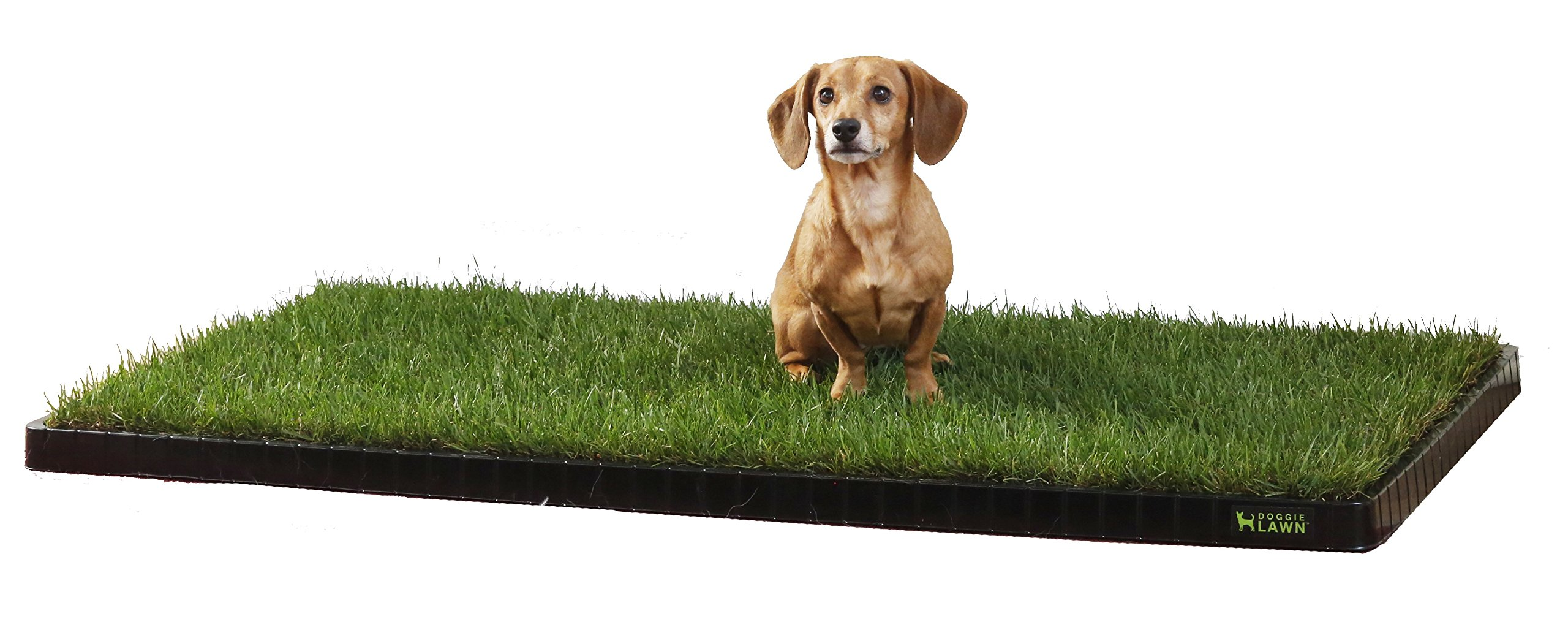 DoggieLawn Dog Potty Kit - REAL Grass & Tray - LARGE 24x48 inches