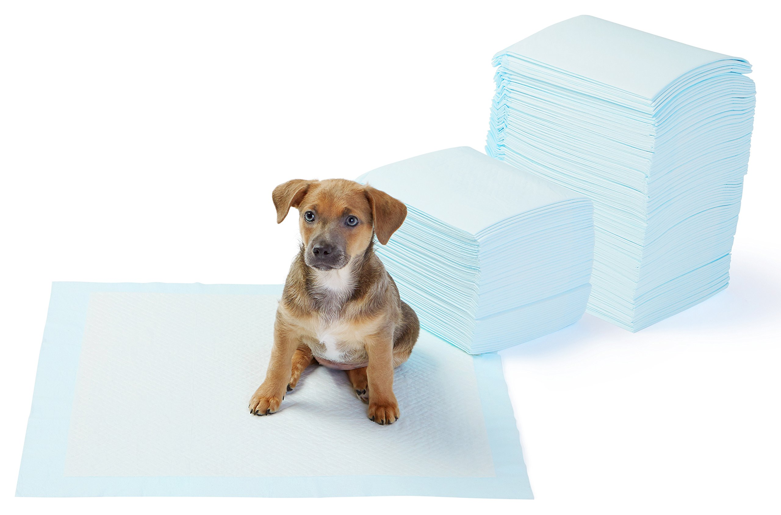 AmazonBasics Regular Pet Dog and Puppy Training Pads - Pack of 150 by AmazonBasics