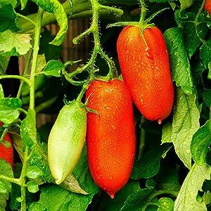 Tomato Garden Seeds - San Marzano (Determinate) - 4 Oz - Non-GMO, Heirloom, Vegetable Gardening Seed