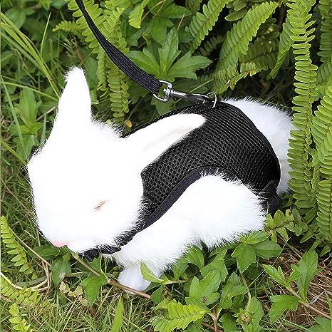 Petcomer Arnés Conejos con Correa Elástica para Animales Pequeños Conejos Hámsteres Gatos (L, Negro