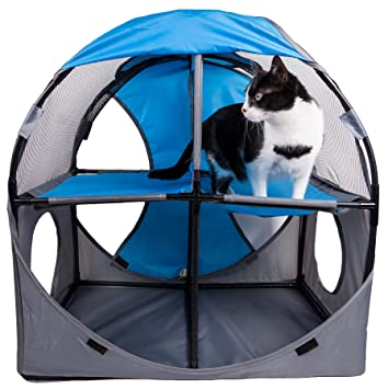 Amazon.com: Mascota de vida kitty-play obstáculo plegable ...