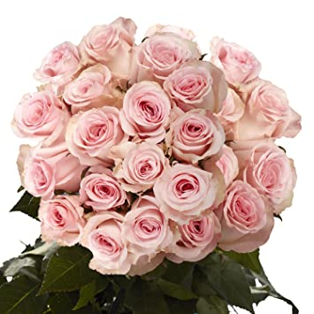 Amazon Fresh Pink Roses Flowers 50 Pink Color Roses Just