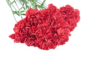 amazon com red carnation bouquet 12 stems without vase