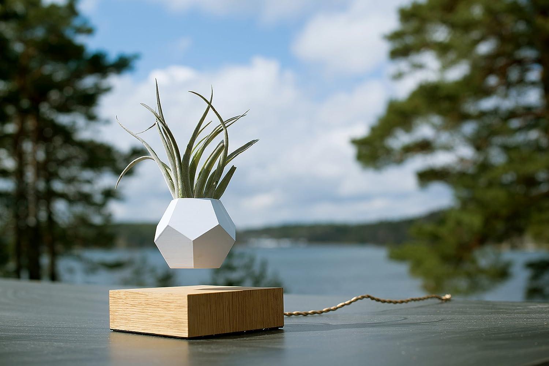 Amazon.com : Flyte Lyfe Floating Planter | White : Garden & Outdoor