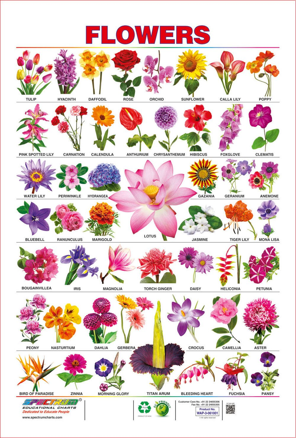Spectrum Pre School Kids Learning Laminated Flowers Name Wall