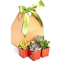 """Unique Succulent Gift Box by Shop Succulents 2"""" (Collection of 5)"""