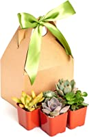 Unique Succulent Gift Box by Shop Succulents 2  (Collection ...  sc 1 st  Amazon.com & Amazon.com Gift Ideas: The most popular items ordered as gifts in ...