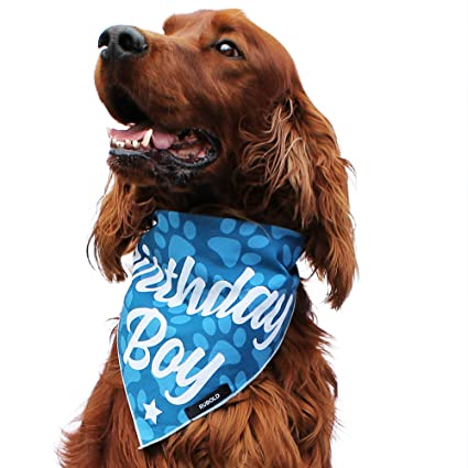 RUBOLD Trend Setter Dog Bandana — Small Medium and Large Bandanas for Every  Occasion or Holiday — Easy to tie on Your Cats or Dogs or Puppy —  Comfortable ... a31dd745f