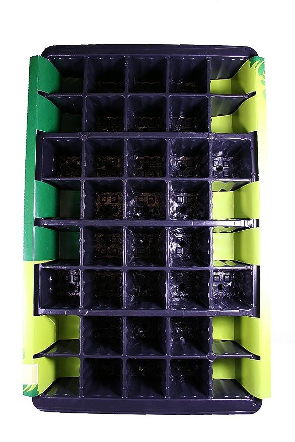 Gardman - Set de bandejas de cultivo (5 unidades, con 40 celdas): Amazon.es: Jardín