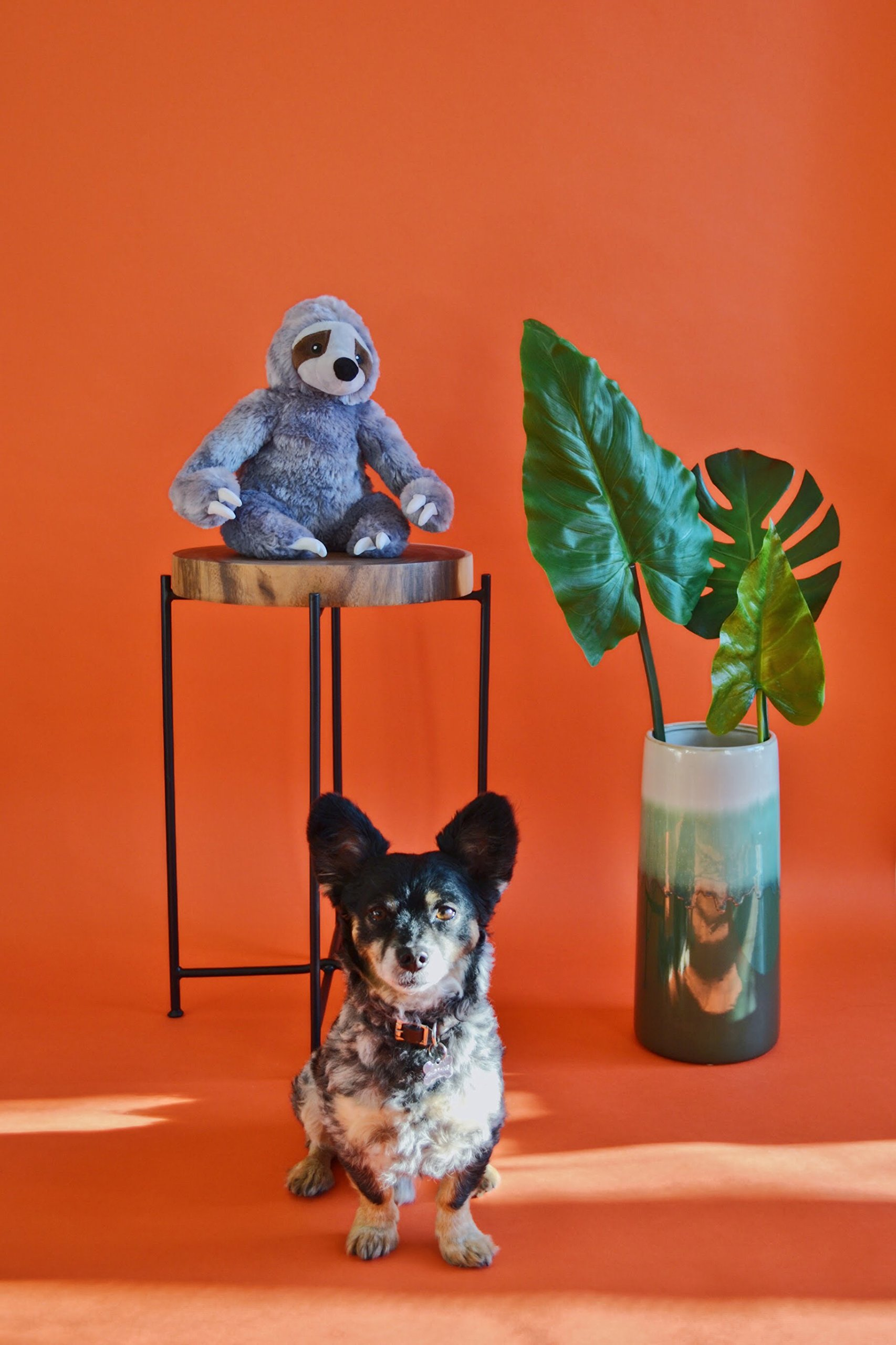 Stanley the Stinky Sloth, Farting Plush Dog Toy with Sound Insert by The Farting Dog Company (Image #5)