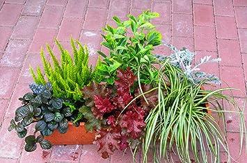 Immergrunes Balkonpflanzen Set 6 Winterharte Pflanzen Fur 60 Cm