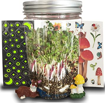 Evviva Sciences Amazing Terrarium Science Kit - Juego educativo ...