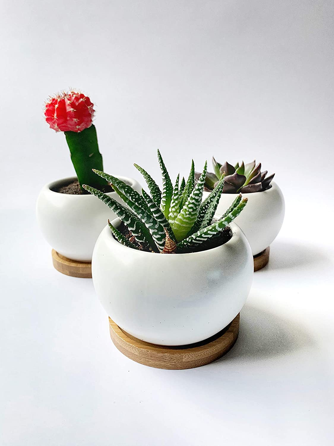 Succulent Pots, White Ceramic with Bamboo Tray, 3.5 inch, Set of 3